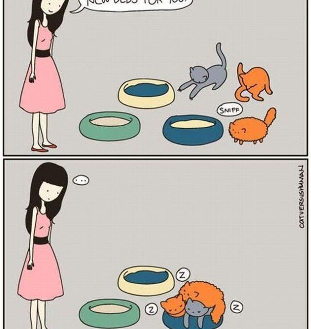 RT si tus gatos también hacen esto