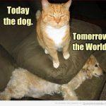 Los gatos son los amos de la casa