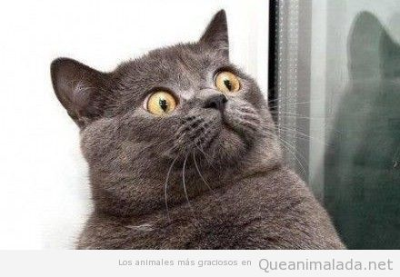 http://queanimalada.net/wp-content/uploads/2012/06/gato-cara-sorprendido.jpg