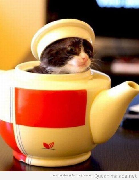 El te de las 5 es importantísimo para mi gato