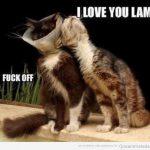 Me encanta tu lámpara