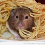 Perdone, camarero, creo que hay un bicho en mi plato de espaguetis