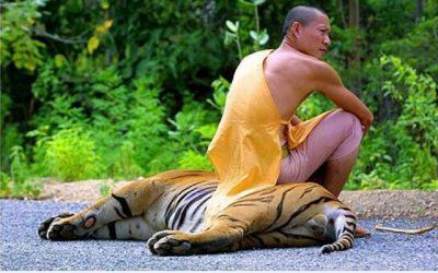Vaya sillones tienen los monjes budistas…