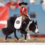El monito cowboy