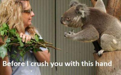 Dame el eucaliptus!