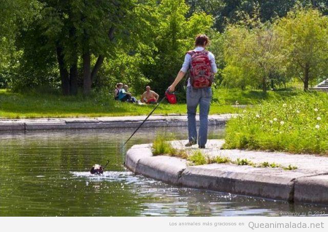 Paseando a mi perro por el parque en verano…