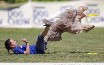 Los perros se vuelven locos con los frisbees