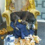 Aggg, es que odiaba la tapicería de ese sillón!