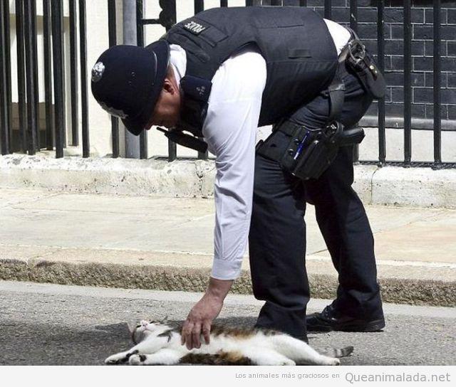 Gatos callejeros detenidos