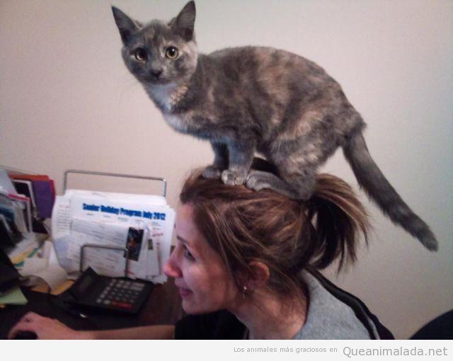 Gato encima de una mujer trabajando en el ordenador en casa