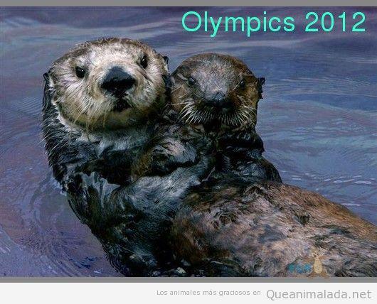 Campeonas en natación sincronizada!