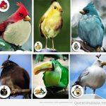 Los Angry Birds en la vida real