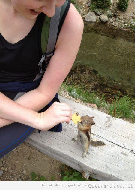 Ardilla pequeña graciosa comiendo una galleta salada en el parque