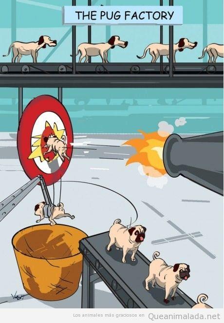 Comic gracioso que explica cómo se fabrican los perros pugs o carlinos