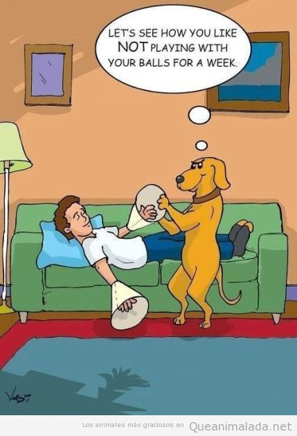 Comic gracioso en el que un perro pone campanas en la mano a su dueño
