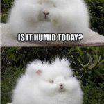 Problemas de pelo de los conejos