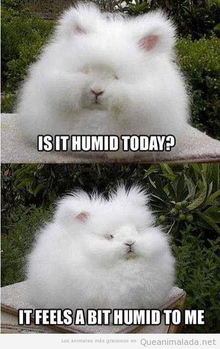 Conejo gracioso con el pelo encrespado por la humedad