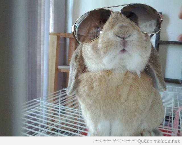 El conejo más chulo del barrio