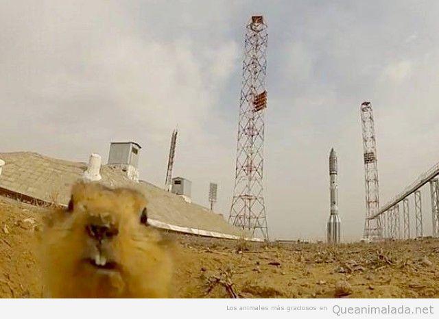 Foto en el que vuelve el dramatic Hamster
