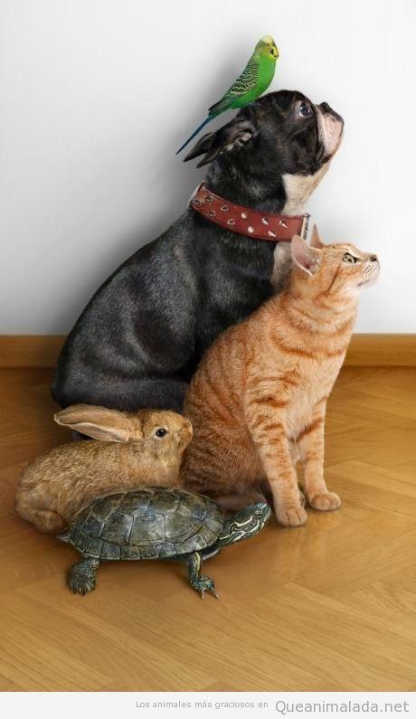 El equipo A de los animales, un perro, gato, conejo, tortuga y pájaro