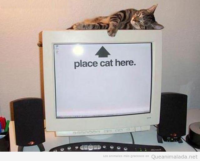 Fondo de escritorio de un ordenador con Place cat here, ponga un gato aquí