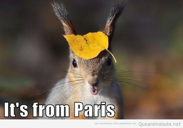 Foto graciosa de un animal con una hoja en la cabeza como si fuese una boina