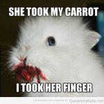 Ella cogió mi zanahoria…