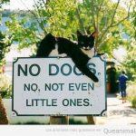 Prohibido perros. Sí, los pequeños también!