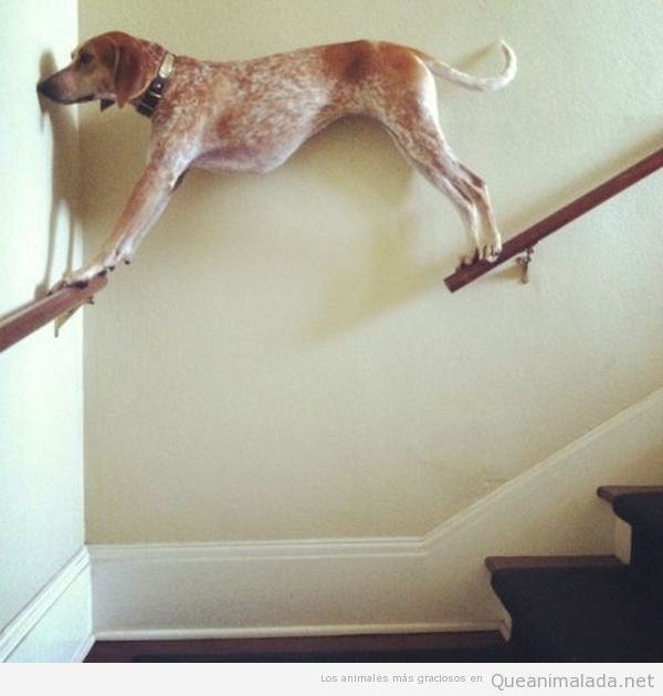 Perro gracioso bajando las escaleras por la barandilla