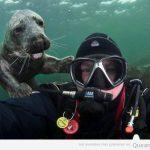 Amigos que haces cuando estás buceando las profundidades…