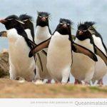 Qué pingüinos más modernos!