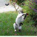 El gato que ha visto demasiadas veces Kill Bill…