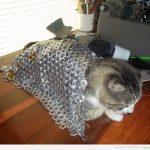 Un gato con armadura…