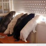 Qué gatos más cotillas!