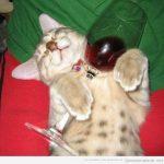 Gatos que llega el viernes y se dan a la bebida