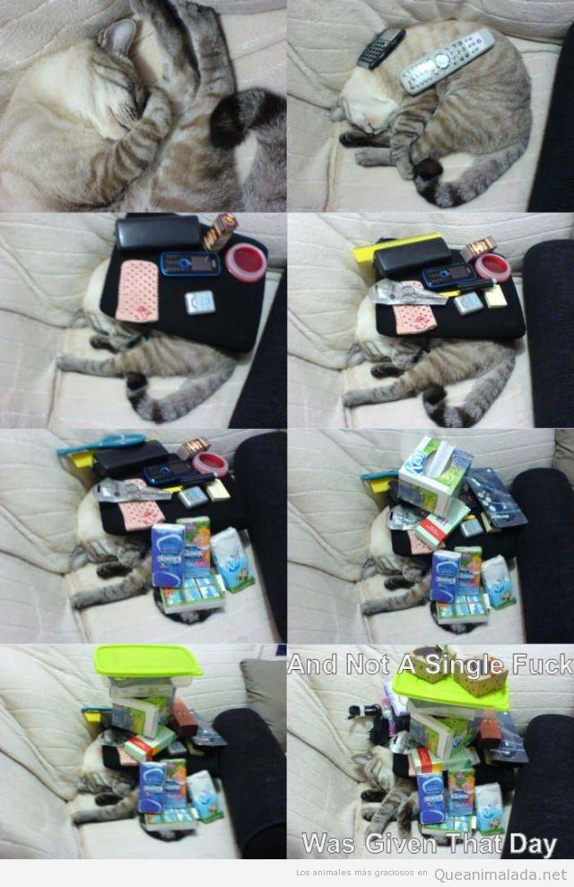 Gato gracioso dormido imposible de despertar