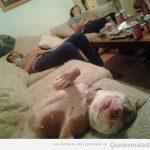 Cada vez más los dueños se parecen a sus perros…