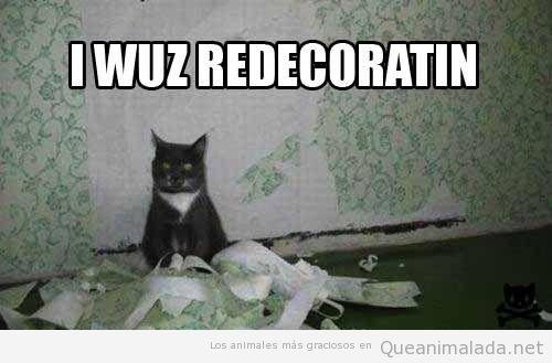 Gato gracioso rompe el papel pintado de la pared
