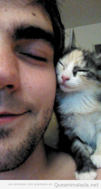Los gatos y sus dueños también se parecen