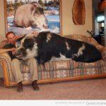 En el sofá con mi mascota