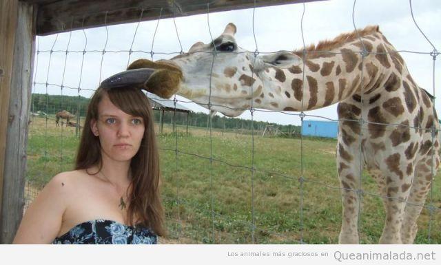 Cuidado cuando te haces fotos al lado de jirafas…