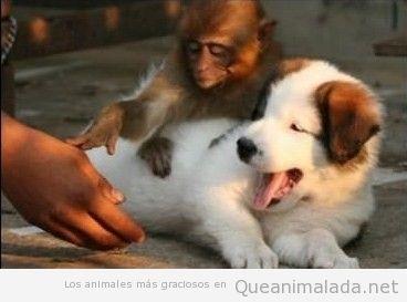 Señor, no toque al perro, por favor