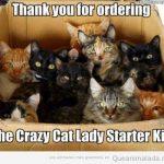 Ha llegado el kit de iniciación para ser la vieja loca de los gatos!