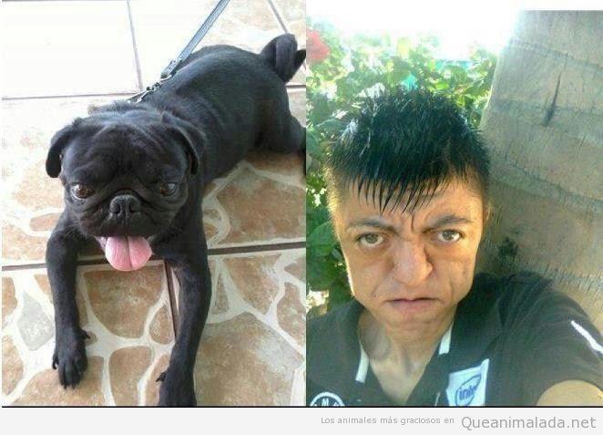 Perros que se parecen demasiado a sus dueños y viceversa