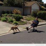 A que tú también has pensado pasear a tu perro así algún día…