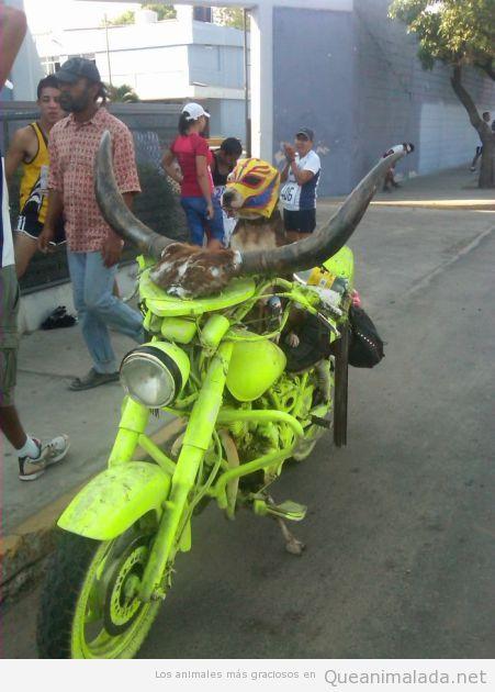 Perro con máscara de lucha libre mexicana