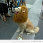 Que sí, que te juro que soy un león