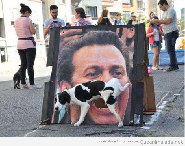 La deuda y el perro orinar