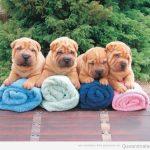 Cuántas toallas hay en la foto?