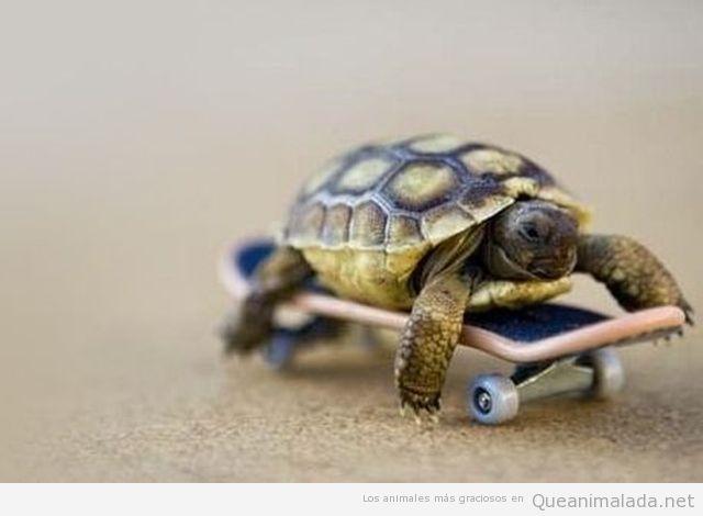 Tortuga pequeña encima de un skate